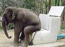 Elephant on Toilet