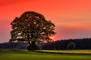 tree-at-sunset-1429336-m